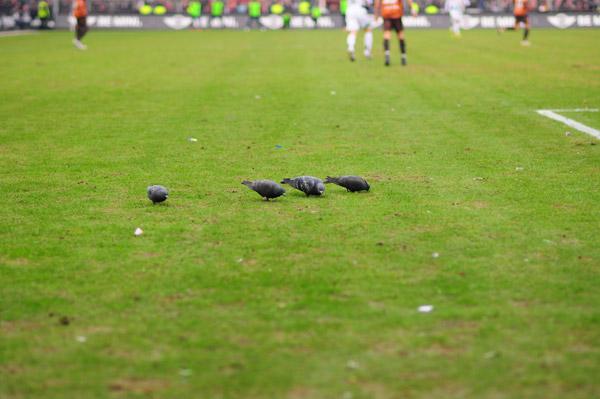 Tauben vergiften im Park